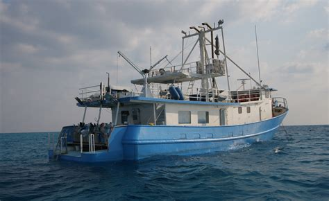 Dolphin Dream Boat Bahamas by Amazing Adventures Travel
