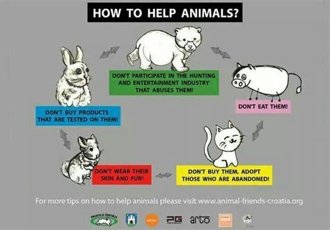 how animals help how to help animals animal rights pinterest