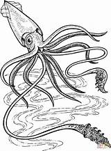 Squid Coloring Giant Pages Printable Ocean Deep Sea Colossal Colouring Supercoloring Octopus Drawing Animals Animal Creature Gigante Crafts Template Marine sketch template