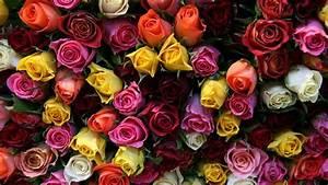 Beautiful Flower Bouquet Flowers Roses 1920×1080 22484 ...