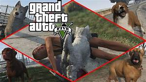 Grand Theft Auto V - Play as Cats & Dogs (Peyote) [1080p ...