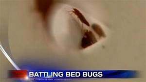 bed bugs attack nyc schools 7onlinecom With bed bugs in schools