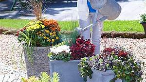 Pflanzen Kübel : stauden in k bel pflanzen oase auf balkon und terrasse ~ Pilothousefishingboats.com Haus und Dekorationen