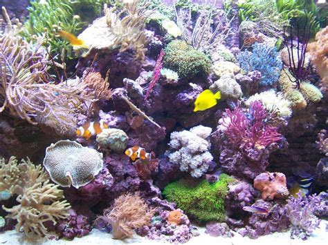 aquarium r 233 cifal chez poisson d or photo de voyage en