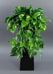 Lang Blühende Pflanzen : photosranke 50cm gr n gelb ad k nstliche pflanzen photos kunstpflanzen ebay ~ Eleganceandgraceweddings.com Haus und Dekorationen