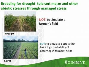 Dr Peter Setimela, DTMA (Drought Tolerant Maize for Africa ...