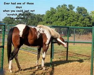 Horse Friendshi... Free Horses Quotes
