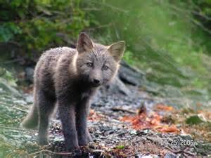 Alaska Wildlife Scenery