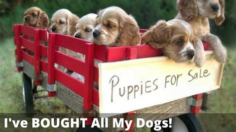 adopt  dog  buy  puppy    cruel