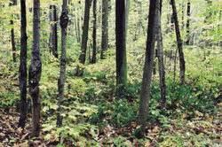 Grenzabstand Bäume Nrw : grenzabstand b ume informatives ~ Frokenaadalensverden.com Haus und Dekorationen