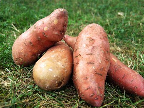 patate douce temps de cuisson
