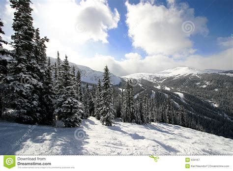 snowy alpine forest royalty  stock photography image