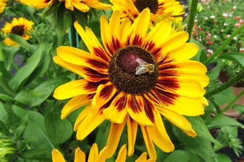 ergebnisse der beet und balkonpflanzen versuche  und