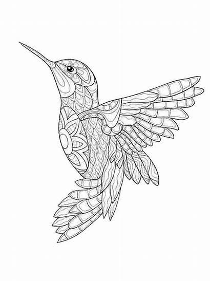 Coloring Pages Zentangle Birds Adults Adult Mycoloring