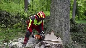 Baum Fällen Technik : achtung baumf llung youtube ~ A.2002-acura-tl-radio.info Haus und Dekorationen