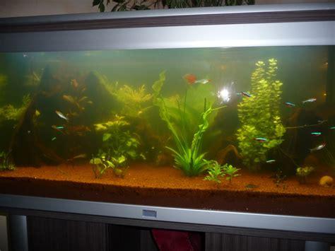 tr騁eau bureau eau trouble aquarium eau chaude 28 images de aqua eau douce poissons d aquarium d eau douce skyrock eau trouble en d 233 but de rodage tom