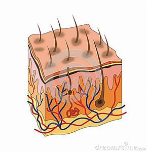 Fibroblast Cartoons, Fibroblast Pictures, Illustrations ...