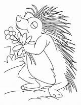 Porcupine Coloring Printable Animal Flower Loving Sheets Clipart Template Lesson Library Popular sketch template