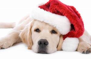 Cute Holiday Dog Pictures on Pinterest | Christmas Puppy ...
