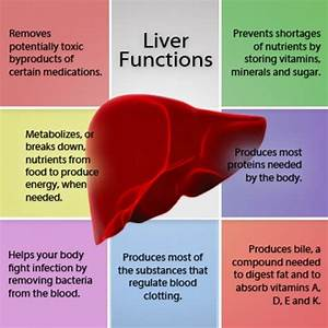 A Healthy Liver