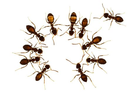 sick ants stay clear    workers  stop disease