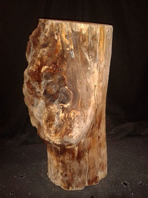 """Spalted Maple Log 8""""Dx20""""H 26lbs #15353 - The Compleat ..."""