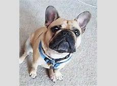 Bilder och Animerade Bilder från Fransk bulldogg ~ Gifmania