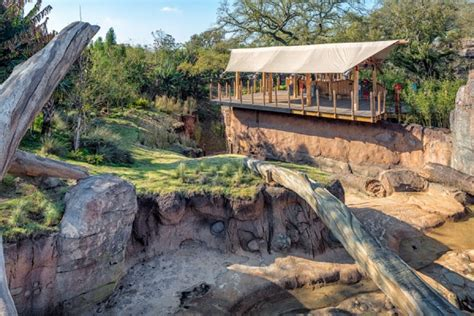 houston zoo   bellows construction corporation