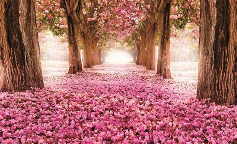 pink trees alley wallpaper murals  homewallmuralscouk