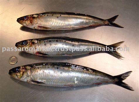sardine fish productsindia sardine fish supplier