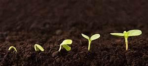 Pflanze Mit S : gartentipps im februar 7 pflanzen f r den start gr gott ~ Orissabook.com Haus und Dekorationen