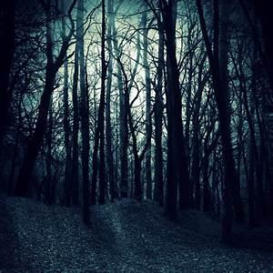 Premade, Bg, Dark, Woods, By, E