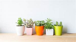 Zimmerpflanzen Für Kinderzimmer : 8 tolle zimmerpflanzen die f r angenehme raumtemperatur im sommer sorgen ~ Orissabook.com Haus und Dekorationen