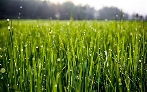 Star Wars 4k Background Morning Dew Drops On Grass Hd Desktop Wallpapers 4k Hd