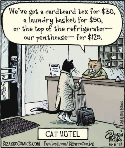 Laundry Memes - 124 best laundry humor images on pinterest laundry humor so funny and artist