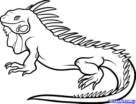 How To Draw An Iguana Step By Step Reptiles Animals