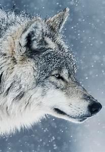 wolf profile | Tumblr