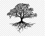 Oak Tree Drawing Silhouette Southern Sketch Clip Clipart Transparent Tiger Eyes Lifting Lid Library Simple Kisspng sketch template