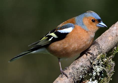 Bird-watching For Beginners At Powerscourt Garden Pavilion