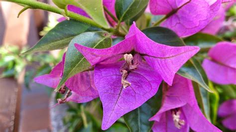 purple vine flowers names purple flower names and pictures beautiful flowers