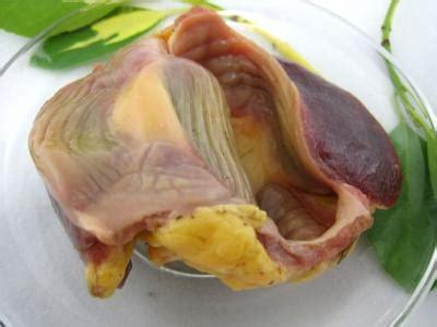 cuisiner les gesiers poulet définition et recettes de quot poulet quot supertoinette