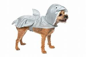 Shark Halloween Dog Costume With Same Day Shipping ...