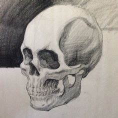 Realistic Skull Drawing How