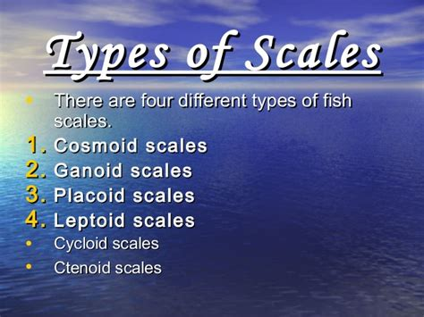 types  scales  fishes