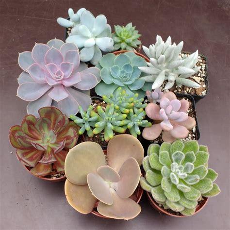 Cactus & Succulent Collections - Sunnyplants.com