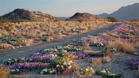 mojave national preserve  national park service