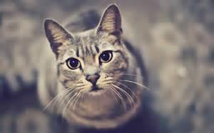 look up cats cat photo look wallpaper 1920x1200 12098