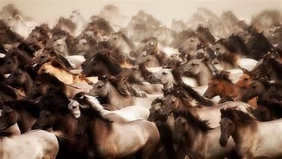 Horse Wallpapers 1080p Wild Desktop
