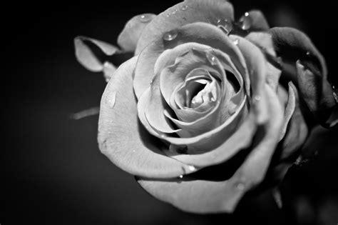 Black And White Flower Wallpaper Dowload