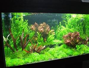 Aquarium Einrichten Pflanzen : die besten 17 ideen zu aquarium einrichten auf pinterest aquascaping aquascape aquarium und ~ Michelbontemps.com Haus und Dekorationen